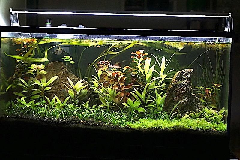 Mon 46L avec des crevettes blacks et Endler  - Page 3 Dsc02913