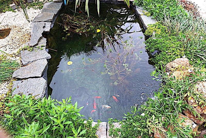 Bassin extérieur avec voiles de chine - Page 11 Dsc07517