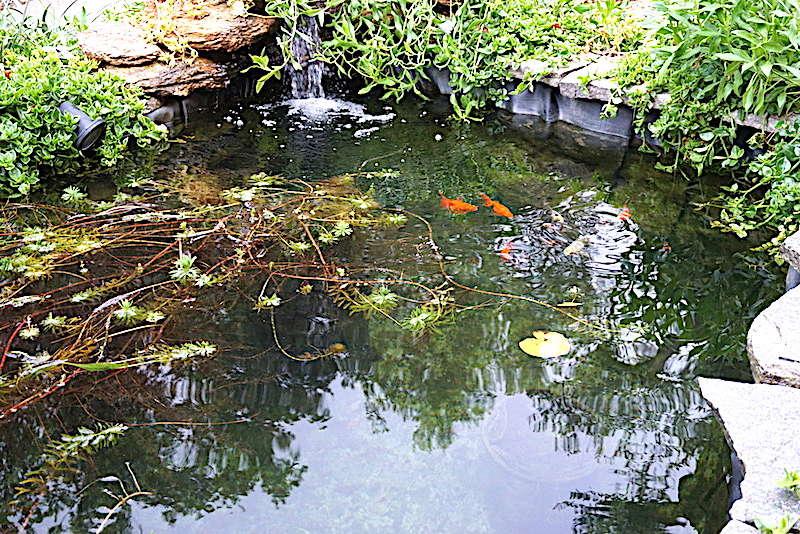 Bassin extérieur avec voiles de chine - Page 11 Dsc07518