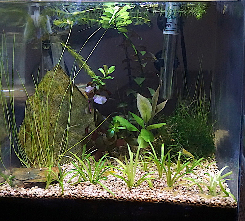 6 BACS ESCALIER dont 4 avec crevettes et 2 avec plantes - Page 4 Nano_211