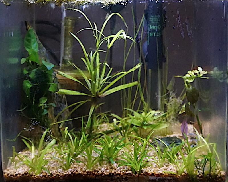 6 BACS ESCALIER dont 4 avec crevettes et 2 avec plantes - Page 4 Nano_511