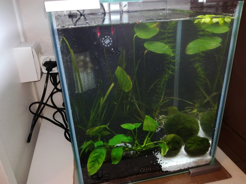 L'aquarium dont vous êtes le héros ! ^^ Img_2016