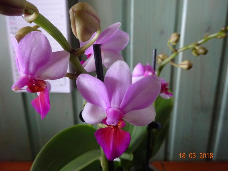Orchideen-Neuzugang 2 - Seite 2 Dorn10