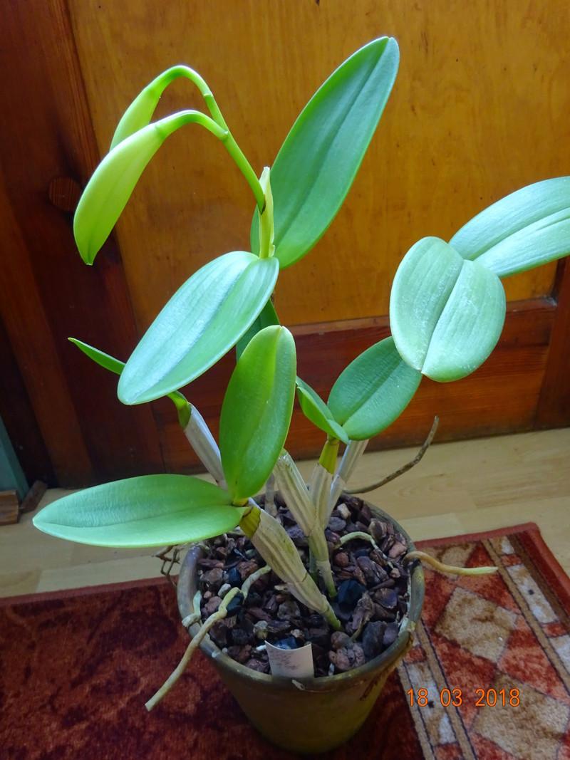 Orchideen-Neuzugang 2 - Seite 2 Interm10