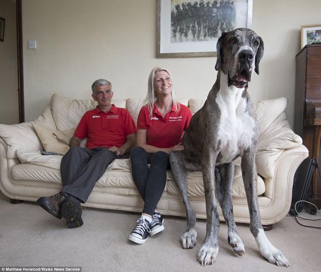 Puto perro (transporte de animal por via aerea) Dog-ho10