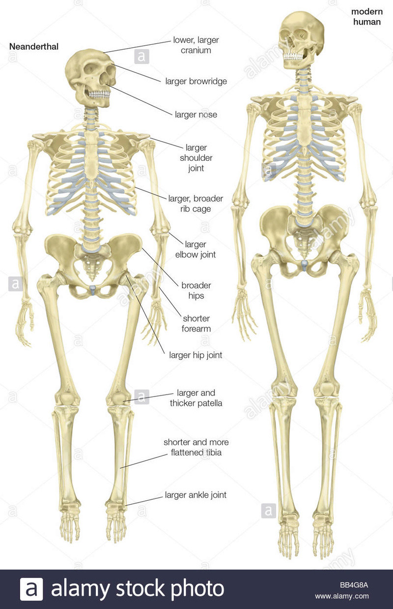 Archéologie - Page 4 Skelet11