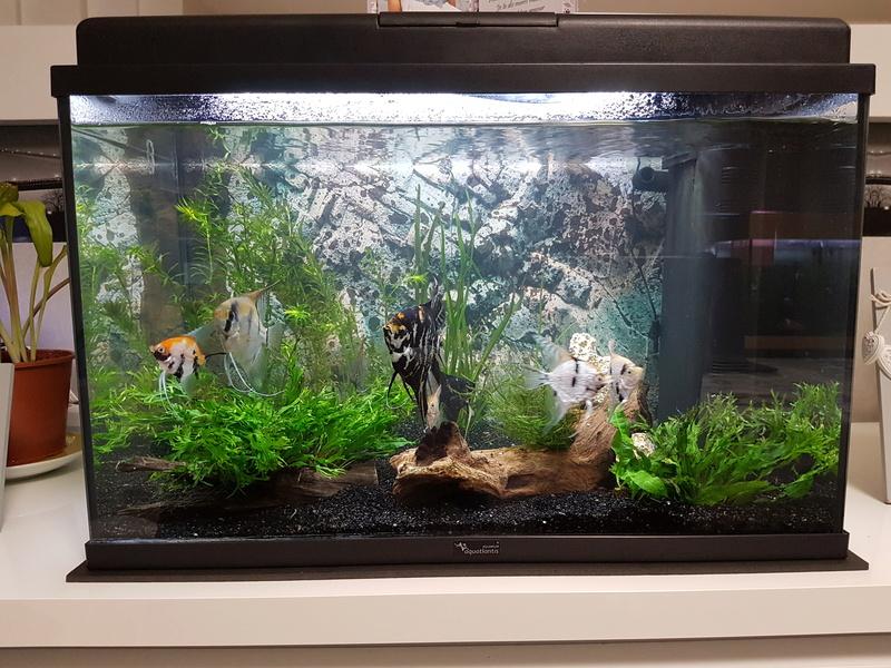Mes 3 aquariums 20171114