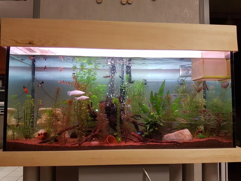 Mes 3 aquariums 20171115