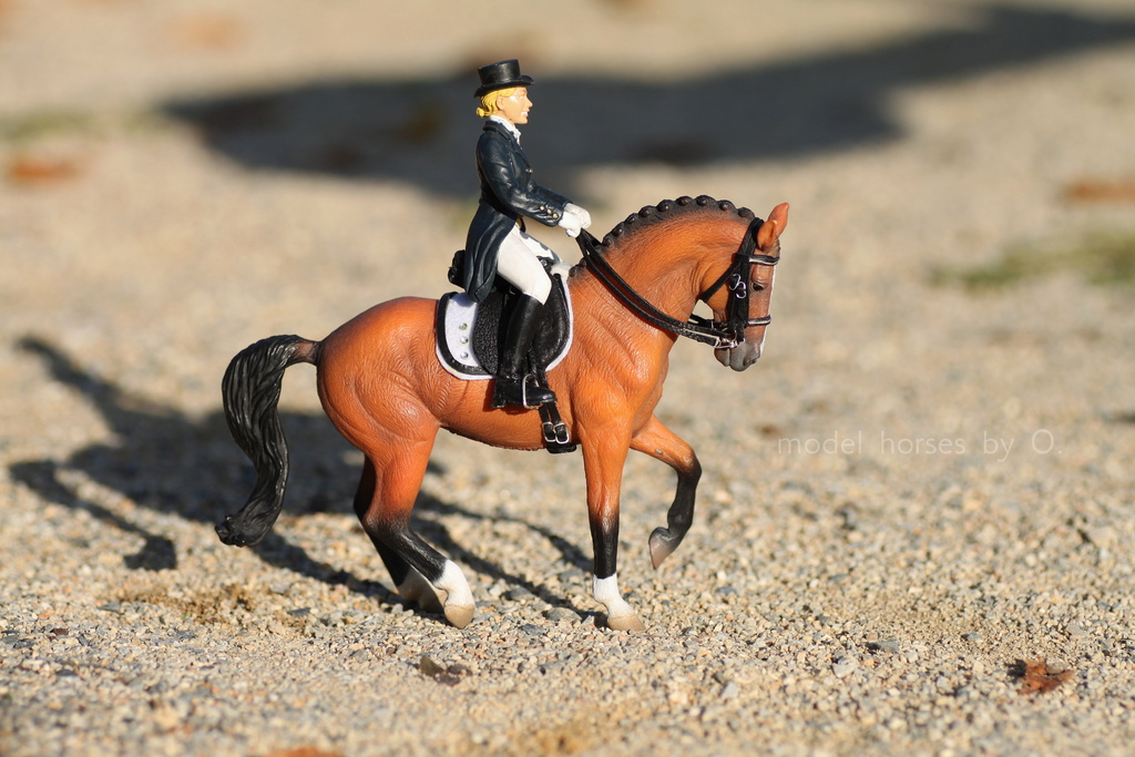 my Deborah McDermott's horses - Page 2 Dressa12