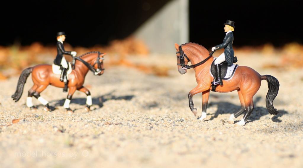 my Deborah McDermott's horses - Page 2 Dressa14