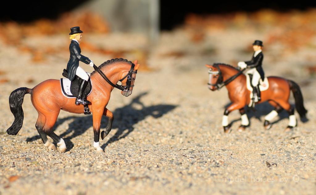 my Deborah McDermott's horses - Page 2 Dressa15