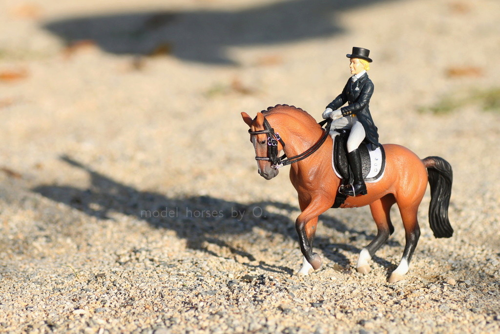 my Deborah McDermott's horses - Page 2 Dressa16