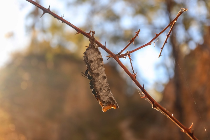 Spring and critters in the NSW goldfields (PICS) Img_3710