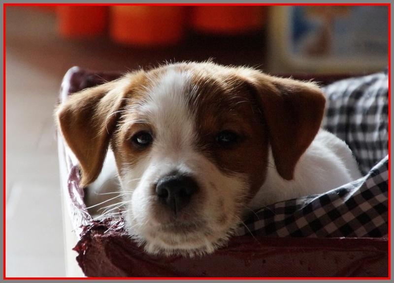 [fil ouvert] Les chiens, nos amis - Page 3 Dsc08225