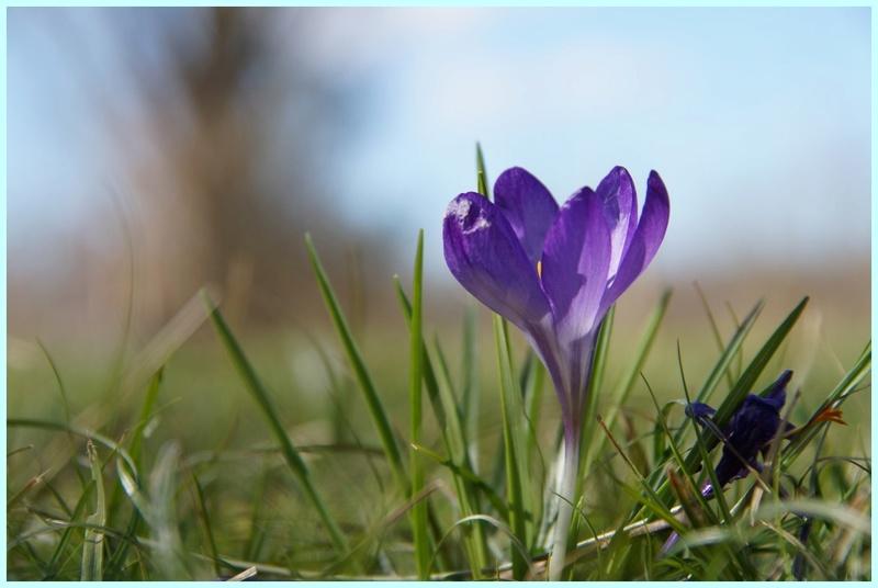 Thème du mois d'avril 2018 :  Passion, fleur ... fleurie !  Dsc08234