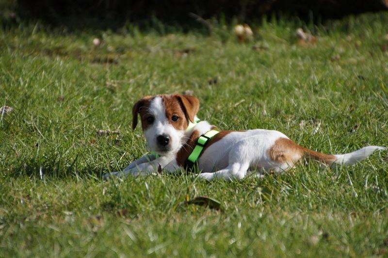 [fil ouvert] Les chiens, nos amis - Page 3 Dsc08310