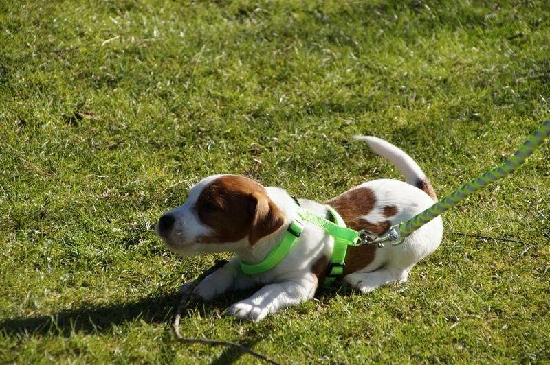 [fil ouvert] Les chiens, nos amis - Page 3 Dsc08314