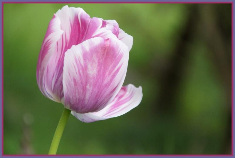 Thème du mois d'avril 2018 :  Passion, fleur ... fleurie !  Dsc08431