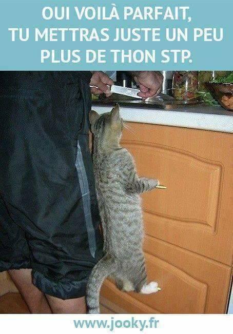 HUMOUR : le chat dans tous ses états - Page 3 21751310