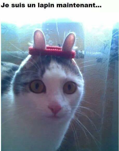 HUMOUR : le chat dans tous ses états - Page 6 22089712