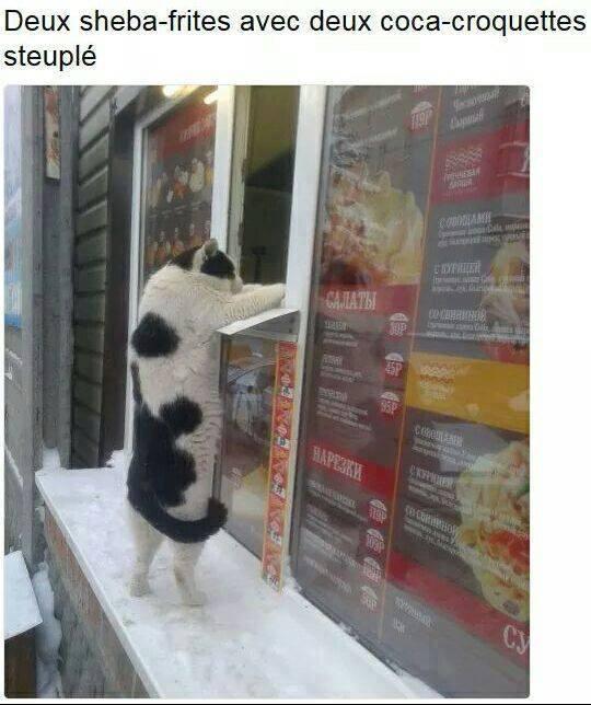 HUMOUR : le chat dans tous ses états - Page 4 22448410