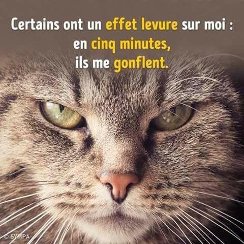 HUMOUR : le chat dans tous ses états - Page 6 22552410