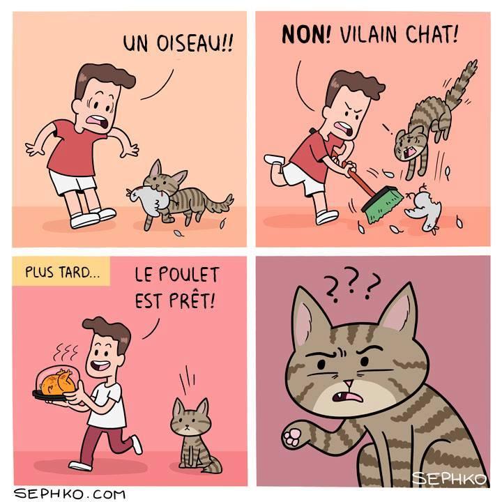 HUMOUR : le chat dans tous ses états - Page 13 24900011