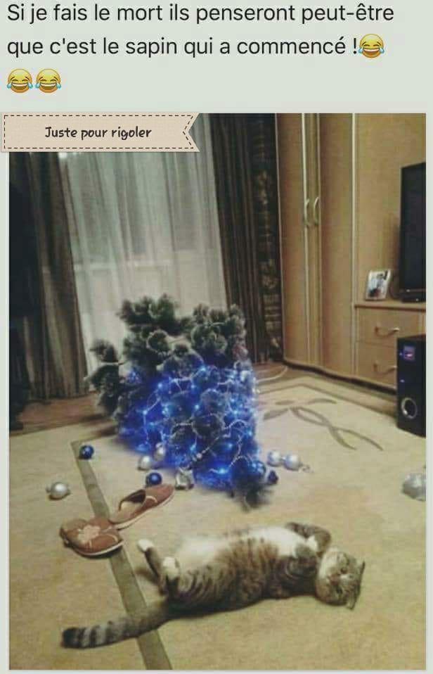 HUMOUR : le chat dans tous ses états - Page 13 26166010
