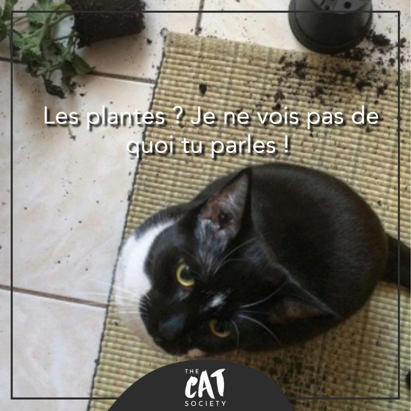 HUMOUR : le chat dans tous ses états - Page 20 28577810