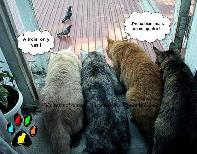 HUMOUR : le chat dans tous ses états - Page 20 29067210