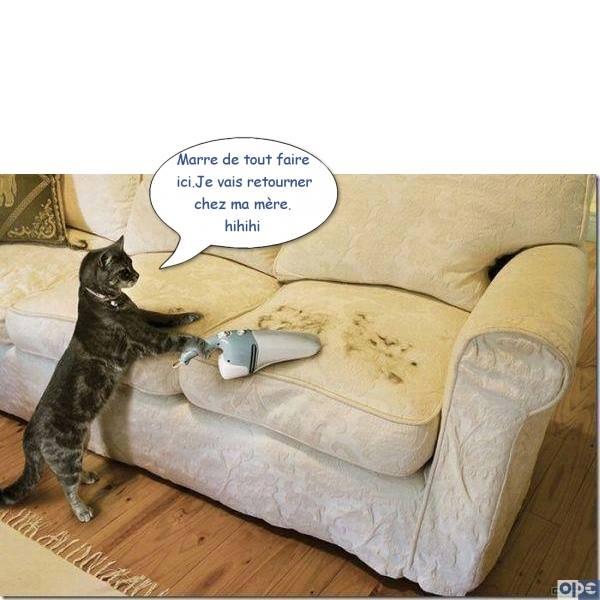 HUMOUR : le chat dans tous ses états - Page 21 29598012
