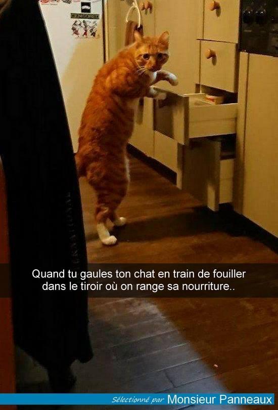 HUMOUR : le chat dans tous ses états - Page 21 29694710