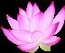 Spécialiste lotus