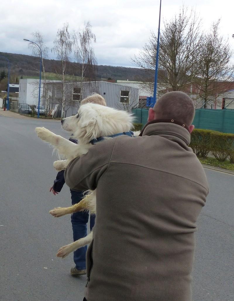 Arrivée par camion du 31 mars 2018 (Roumanie Tamara) - Page 6 P1110611