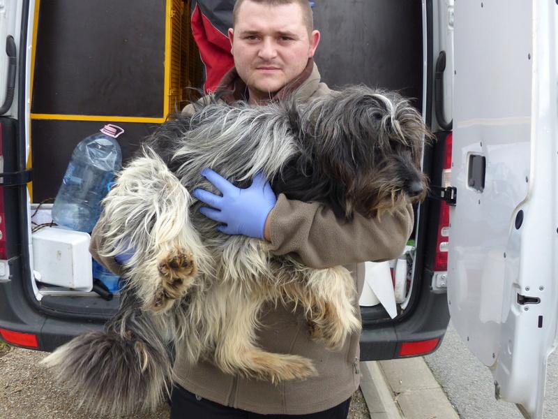 Arrivée par camion du 31 mars 2018 (Roumanie Tamara) - Page 6 P1110621