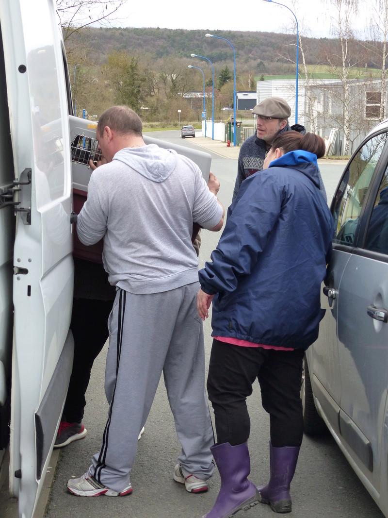 Arrivée par camion du 31 mars 2018 (Roumanie Tamara) - Page 6 P1110623