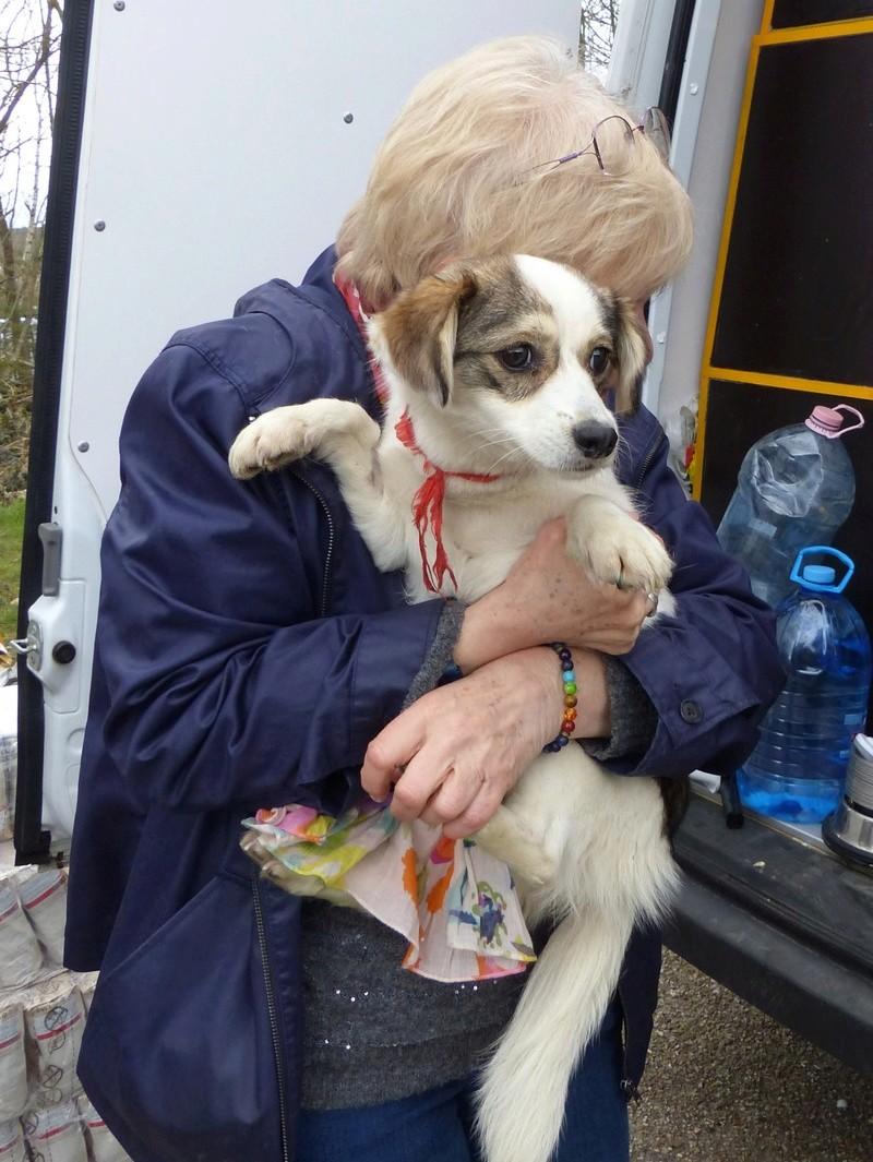 Arrivée par camion du 31 mars 2018 (Roumanie Tamara) - Page 6 P1110643