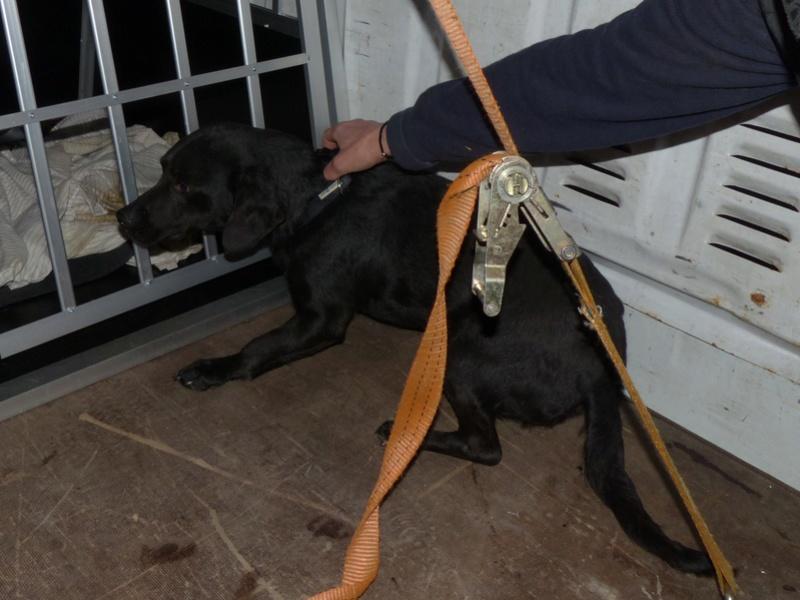 Arrivée camion des chiens Serbes de BELLA le 28 avril 2018 - Page 3 P1120011