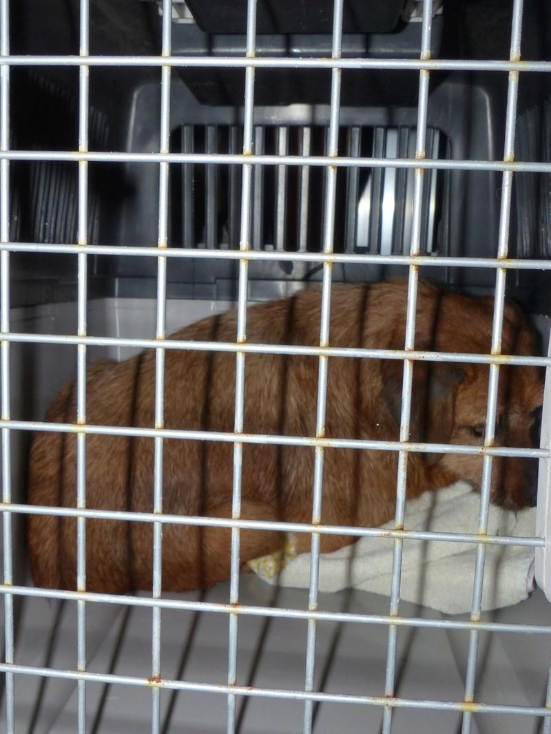 Arrivée camion des chiens Serbes de BELLA le 28 avril 2018 - Page 3 P1120030