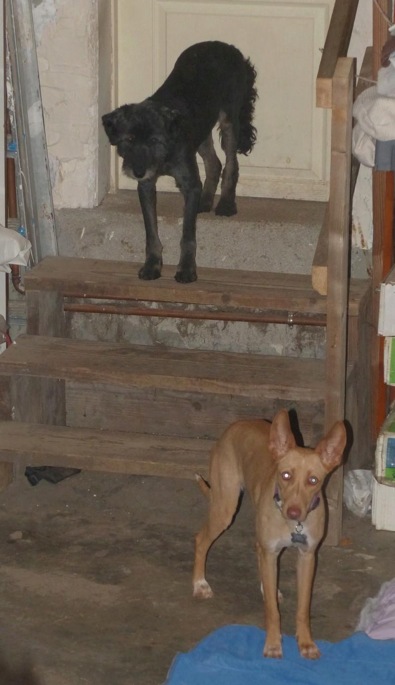 Arrivée camion des chiens Serbes de BELLA le 28 avril 2018 - Page 3 P1120031