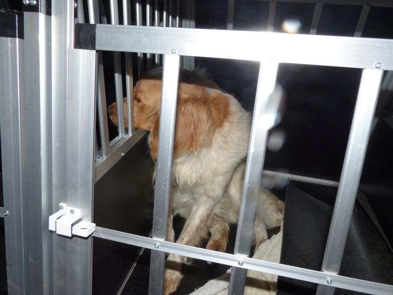 Arrivée camion des chiens Serbes de BELLA le 28 avril 2018 - Page 3 P1120043