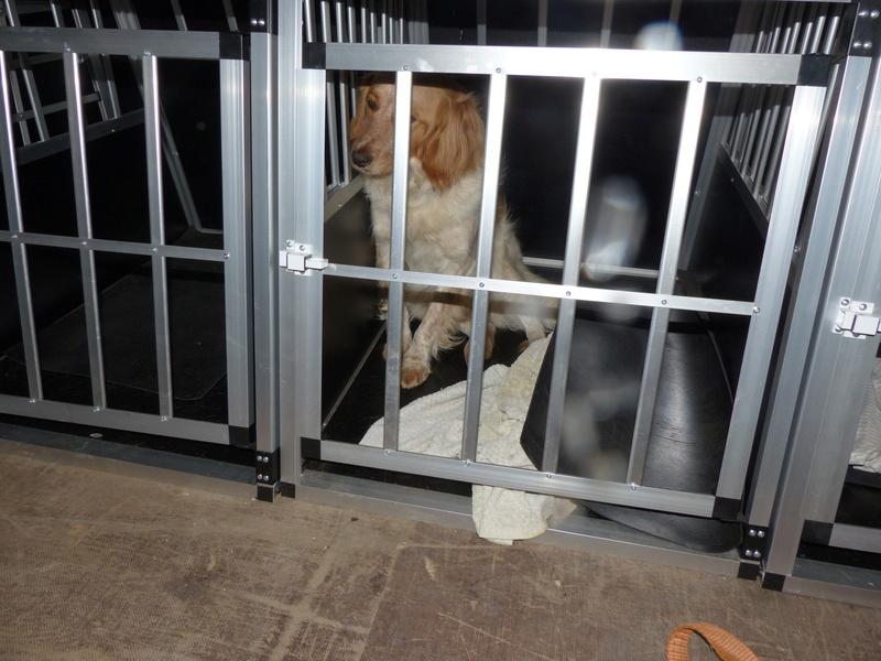 Arrivée camion des chiens Serbes de BELLA le 28 avril 2018 - Page 3 P1120044