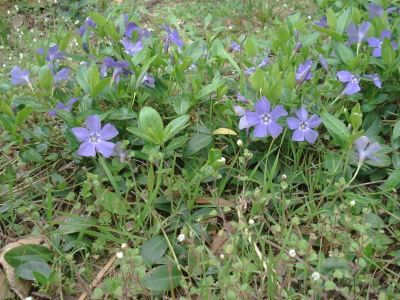 Fleurs de saison - Page 5 Dsc04410