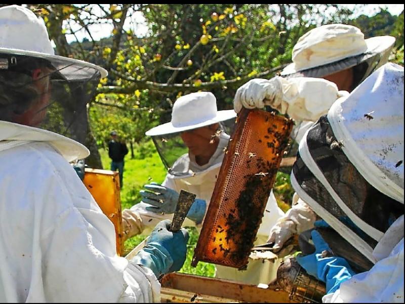 Saint-Brieuc. Six ruches en attente de parrains A30