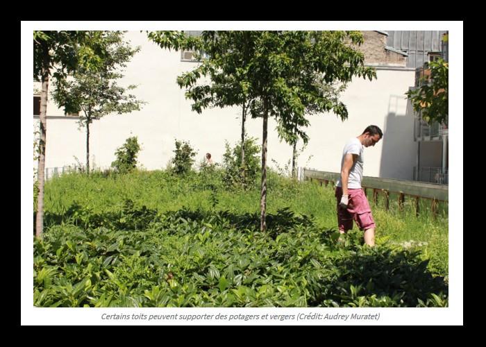 Toitures végétalisées : cinq bonnes raisons de les adopter  Sans1050