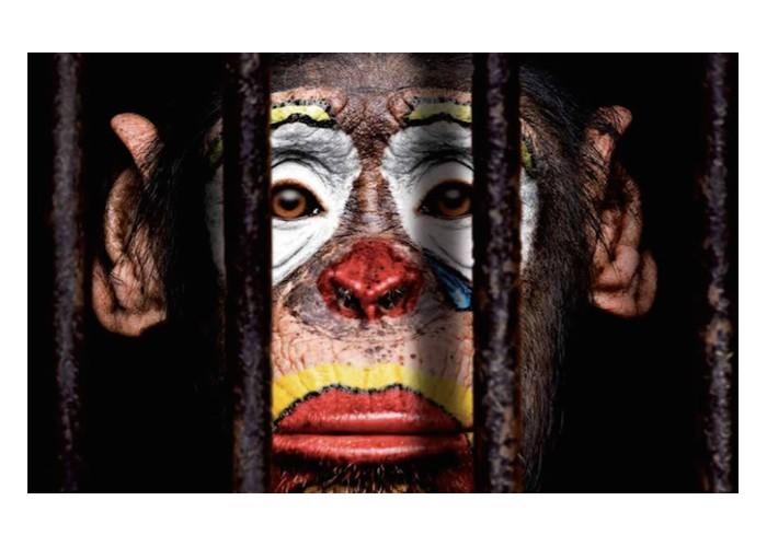 Les animaux de cirque, un spectacle devenu intolérable  Sans1107