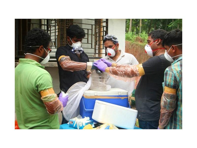 Pourquoi le virus Nipah inquiète tant les médecins Sans1482