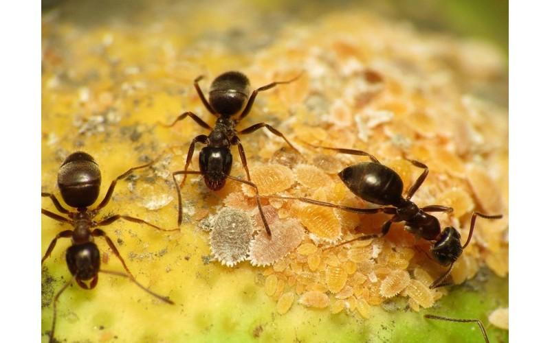 Les fourmis ont inventé le congé maladie bien avant l'homme Sans1524