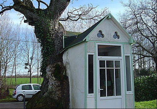 Le gros chêne de la Chevasse, Saint-Sulpice-le-Verdon (Vendée) Sans_465
