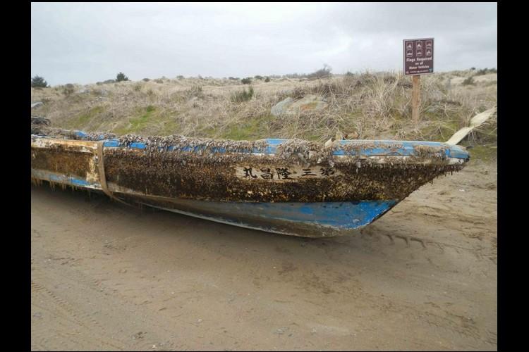 Le tsunami de 2011 a transporté des animaux marins du Japon jusqu'en Amérique Sans_t16